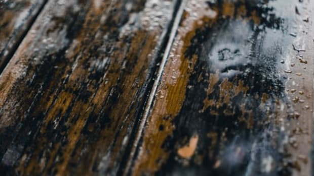 why-mold-removal-from-wood-is-harder-than-you-think