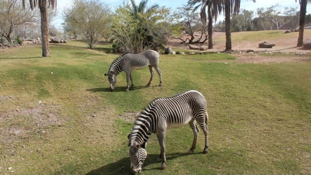 best-tourist-attractions-in-arizona