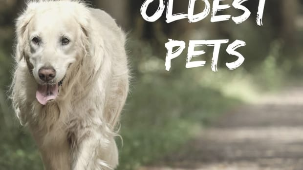 worlds-oldest-pets