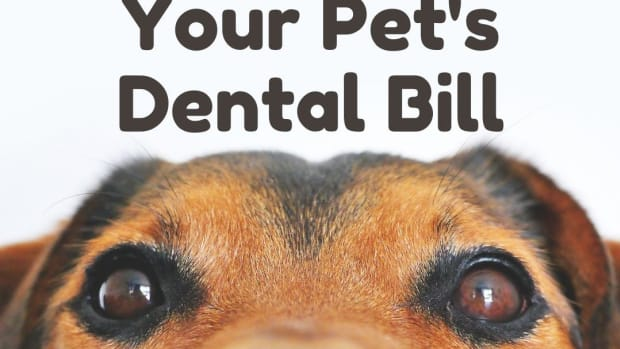 lets-break-down-your-pets-dental-or-teeth-cleaning-bell