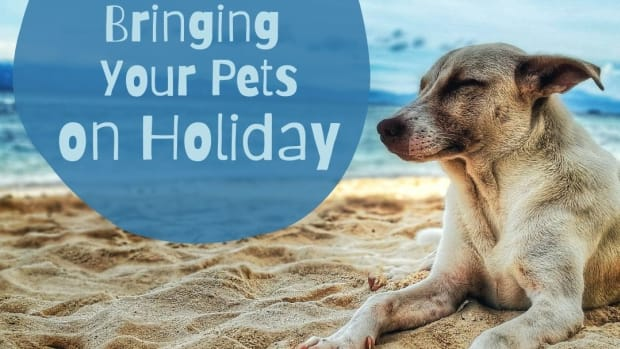 travelling-with-pets-a-guide-for-first-timers