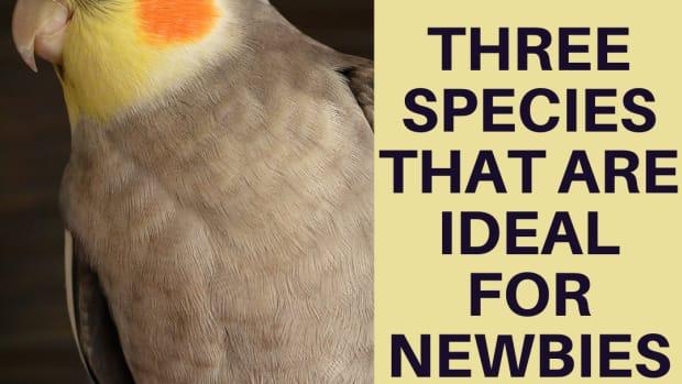 ideal-beginner-pets-for-a-bird-lover