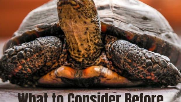 pet-turtle-or-tortoise