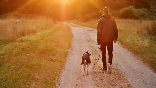 the-health-benefits-of-owning-dogs