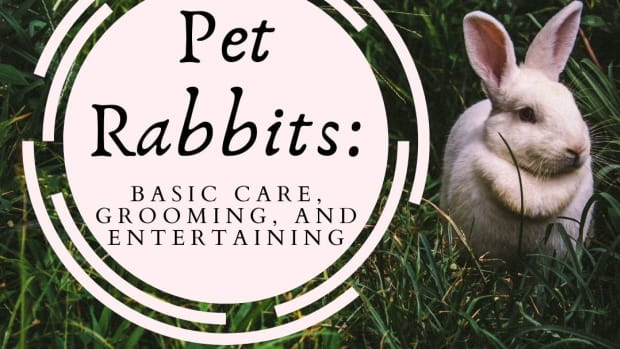 caring-for-your-pet-rabbit