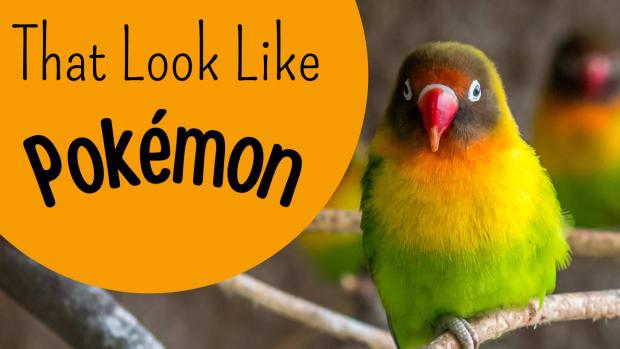 exotic-pets-that-look-like-pokemon