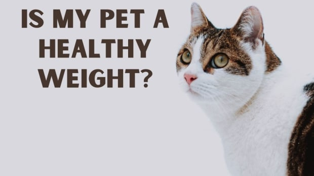 is-my-dog-or-cat-a-healthy-weight