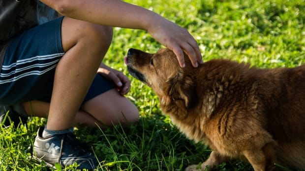 10-surprising-health-benefits-of-owning-a-pet