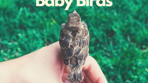 feedababybird