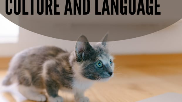 cat-got-your-tongue-common-and-cute-cat-expressions