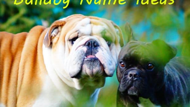 good-bulldog-name-ideas