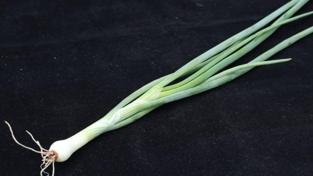 are-scallions-the-same-as-green-onions-bonus-recipe