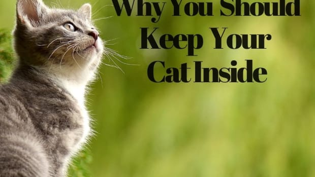 10-reasons-why-you-should-not-let-your-cat-outside