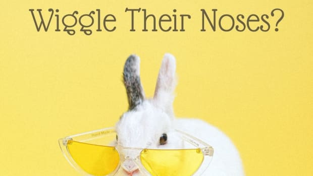 why-do-rabbits-noses-twitch