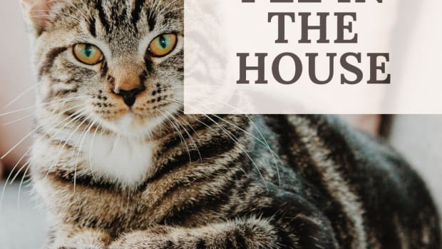 the-five-biggest-reasons-your-cat-wont-use-their-litter-box