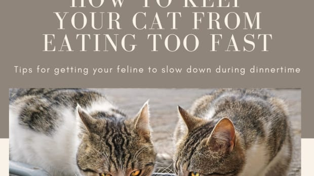 how-to-keep-a-cat-from-eating-too-fast