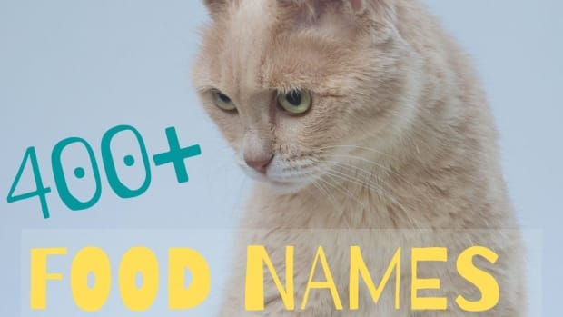 food-names-for-cats