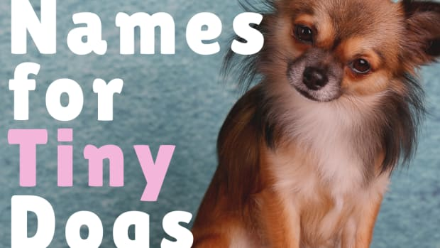 360-cute-small-dog-names-for-girl-and-boy-dogs-with-meanings