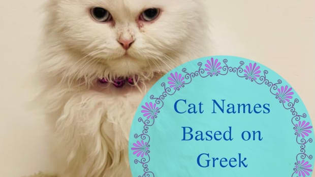 15-names-for-your-cat-based-on-greek-mythology