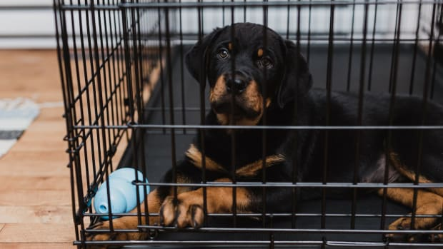 modern-crate-training-use-a-doggy-playpen