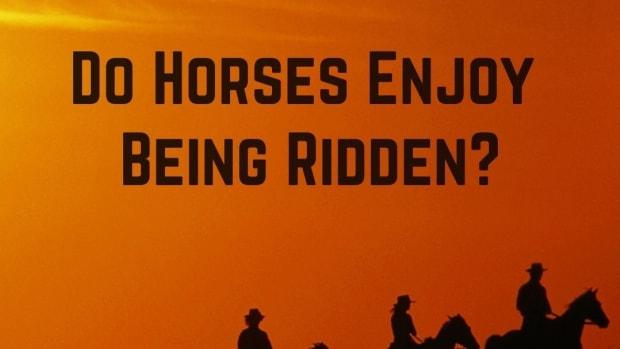 do-horses-enjoy-being-ridden