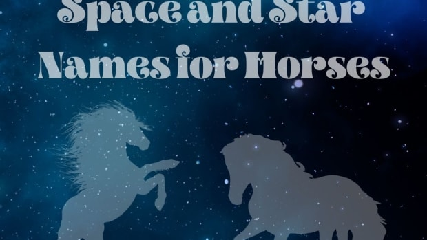 15-astronomy-names-for-horses