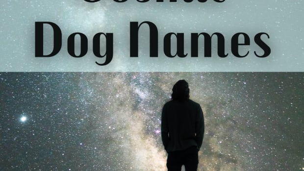 cosmic-names-for-dogs-from-the-cosmos-and-science