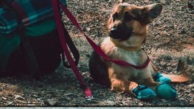 what-to-pack-for-a-camping-trip-with-your-dog
