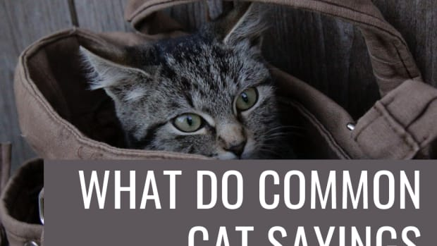 meaning-of-cat-expressions-sayings-cliches-cat-phrases-origins