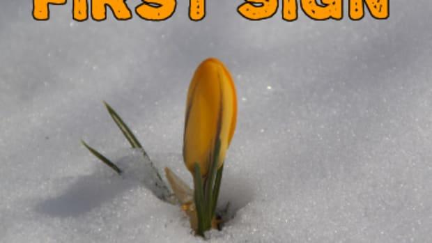 poem-first-sign-of-spring