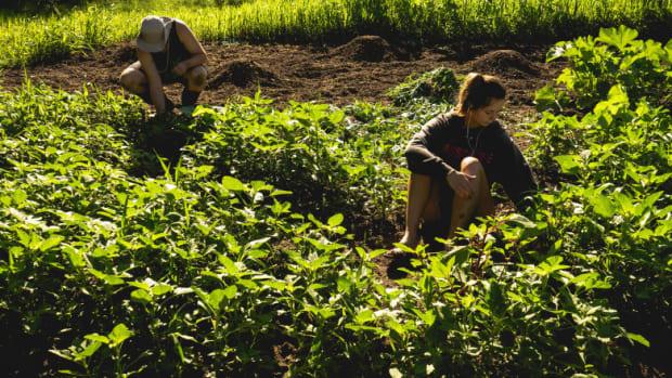 factors-behind-lack-of-food-security