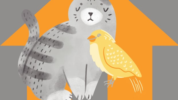 can-cats-and-birds-live-together-in-the-same-house