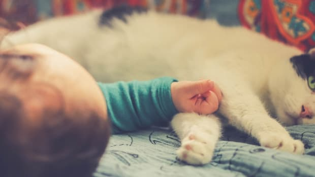 cats-and-kids