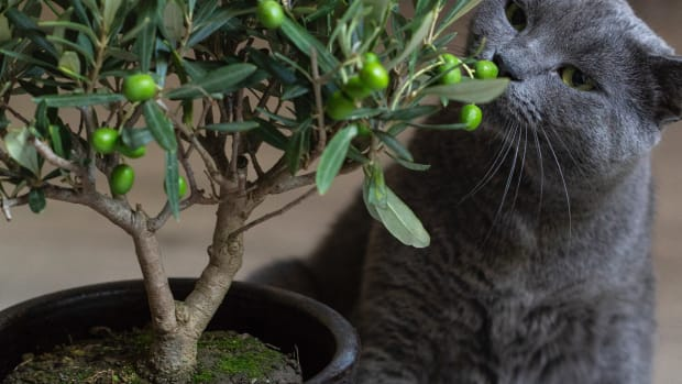 cats-and-houseplants