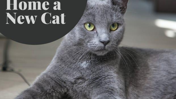 cat-ownership-the-basics