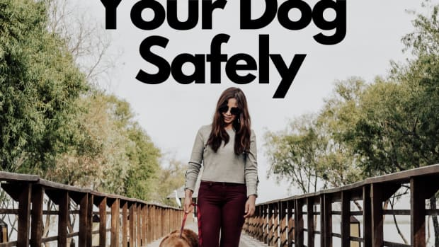 the-best-safety-tips-for-walking-your-dog