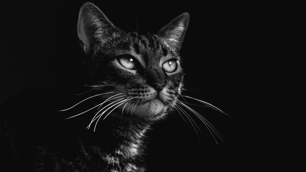 10-cute-cat-names-for-girls-from-black-and-white-movies