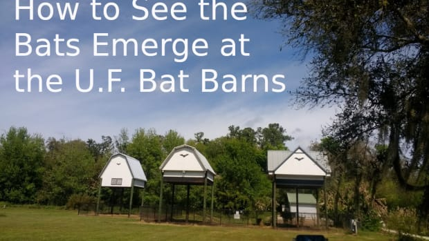 uf-bat-house-gainesville-florida