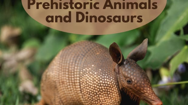 pets-you-can-own-that-look-like-dinosaurs-and-prehistoric-animals