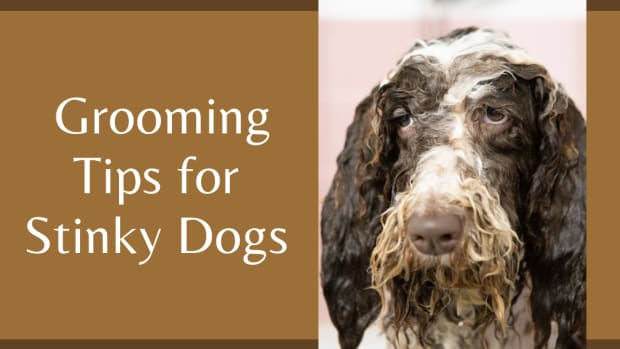 top-5-stinky-dog-grooming-tips