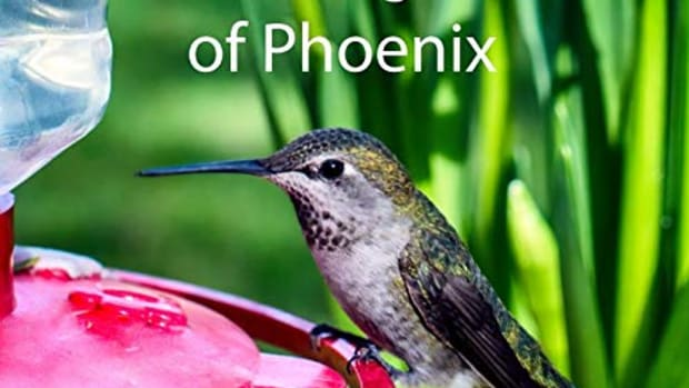 arizona-is-your-hummingbirds-in-your-yard