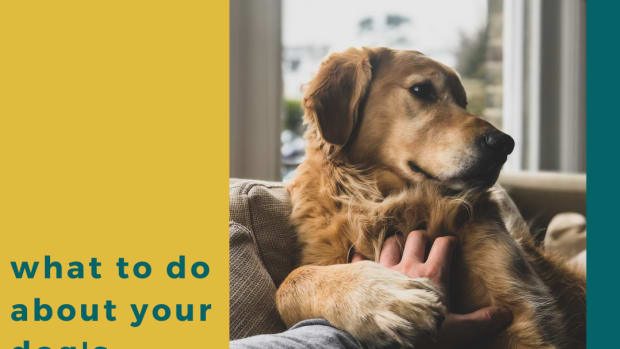 how-to-cure-separation-anxiety-in-dogs