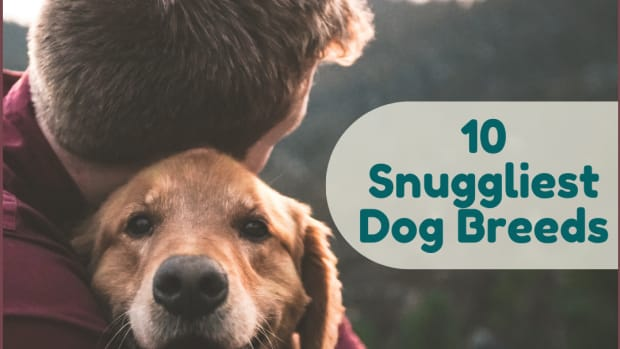which-dogs-are-most-affectionate