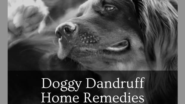 dog-home-remedies-for-dandruff