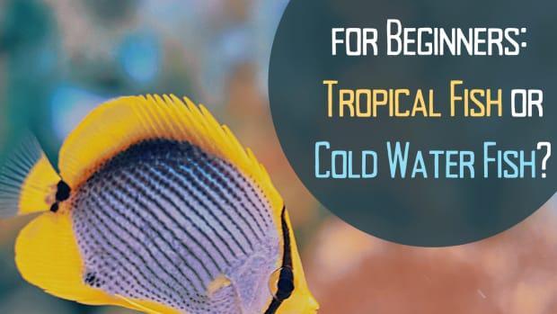 should-i-keep-tropical-fish-or-cold-water-fish