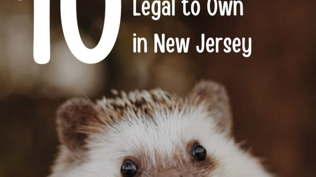 10-exotic-pets-legal-in-new-jersey