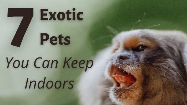miniature-exotic-zoo-pets