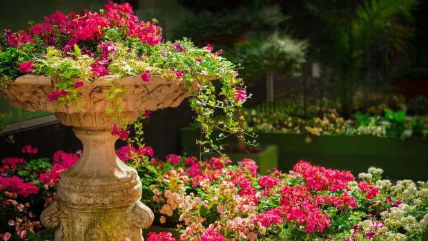 stories-from-james-garden