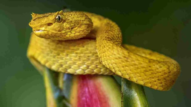 the-truth-about-snake-island-everybody-should-know