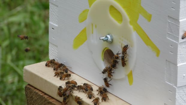 free-honey-bees